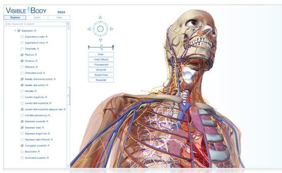 Anatomie des menschlichen Körpers in 3D | VAN SWIETEN BLOG – Infos ...
