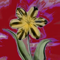 Tulpe_M.Hartl.jpg