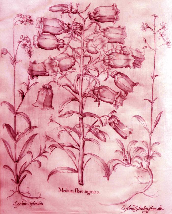 medium-flore-argenteo
