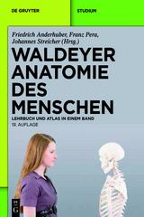 waldeyer_anatomie