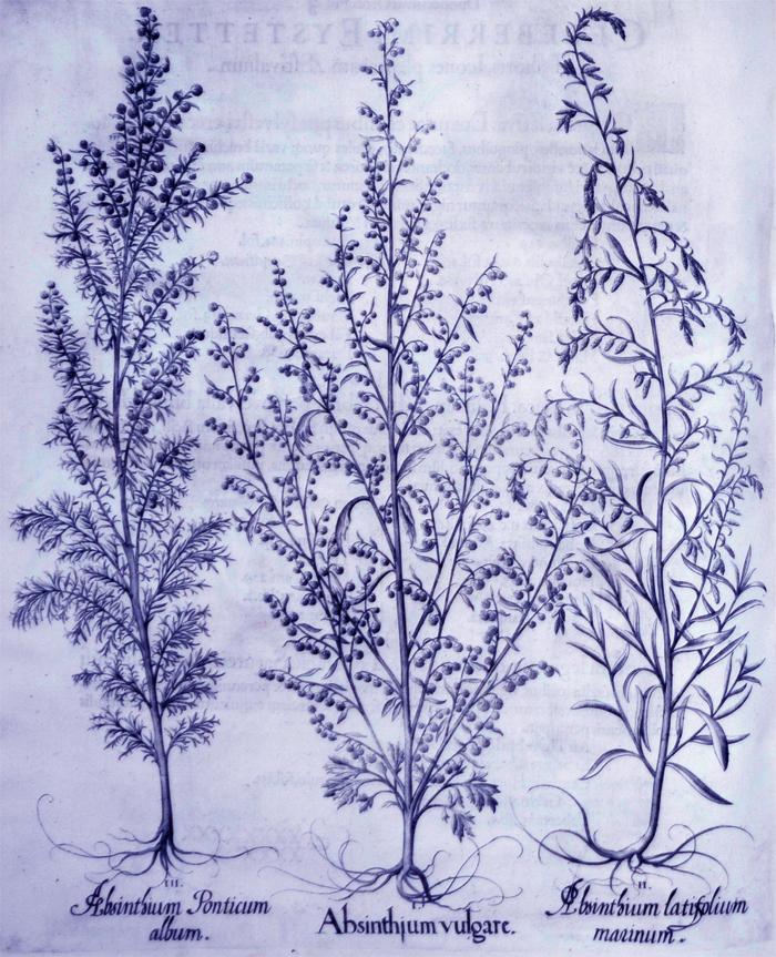 absinthium-vulgare