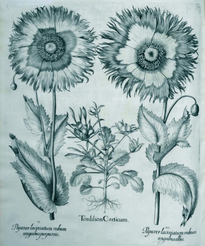 tordilion-cretium